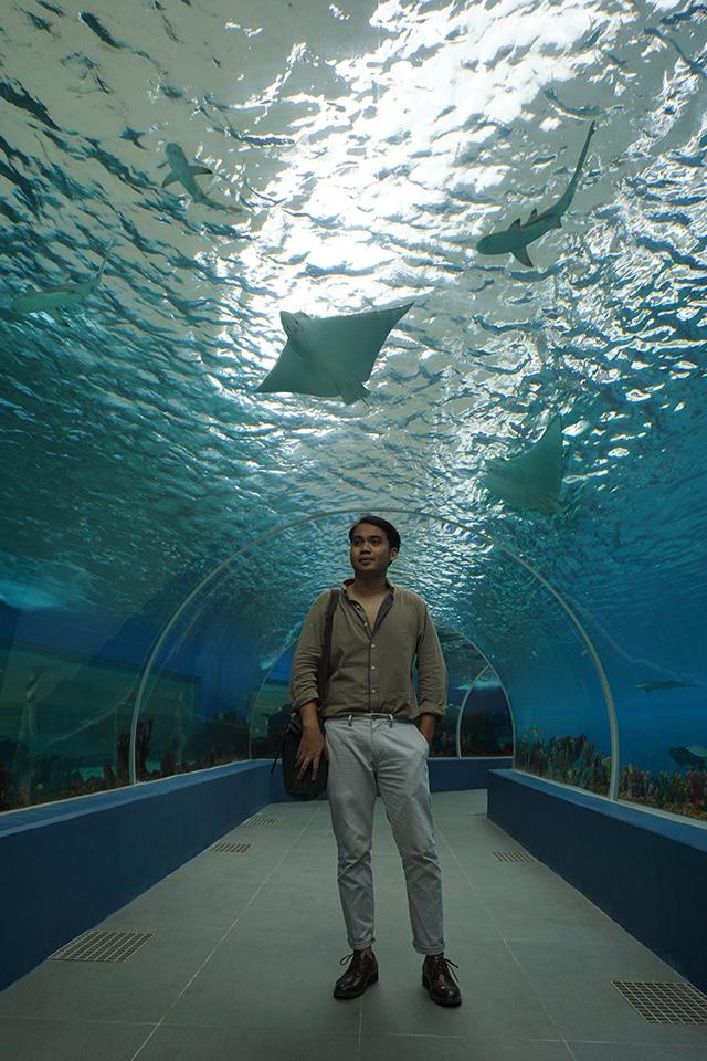Dive Into An Adventure At Cebu Ocean Park